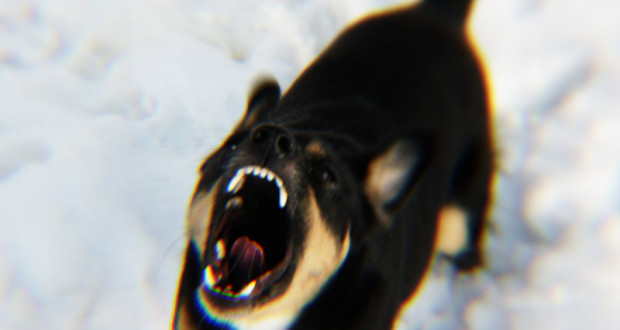 uwaga_wsciekly_pies