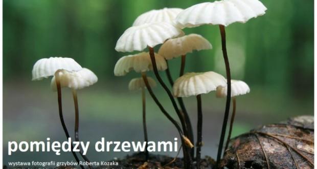 plakat_pomiedzy_drzewami