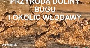 Leszek Niejedli plakat