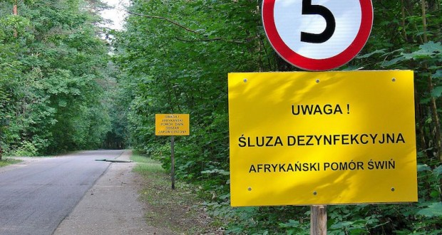 Afrykański_pomór_świń_Wiejki_Bielewicze_Gmina_Gródek
