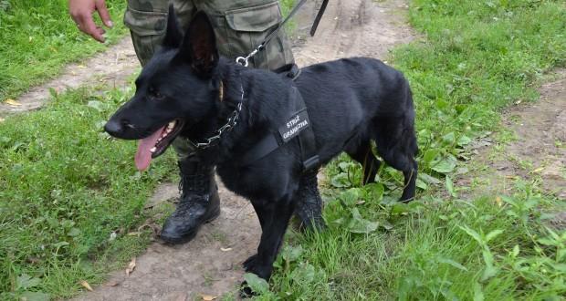 straz graniczna pies
